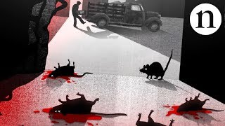 Download Blood, rats and anticoagulants: The story of warfarin Video
