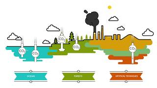 Download What are carbon sinks? | Sustainability Video