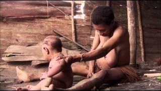 Download EBS 다큐프라임 - EBS Docuprime 아시아의 열대 1부 나무인간, 오랑뽀혼 #002 Video