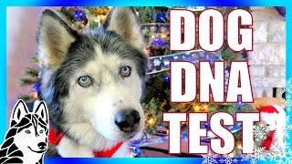 Download DOG DNA TEST RESULTS | Day 8 of 12 Days of Giveaways 2016 🎄 Oakley and Shelby Video