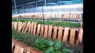 Download Helixirion snail farm Video