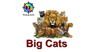 Download Types of Big Cats (wild cats) - Finding Earth Video