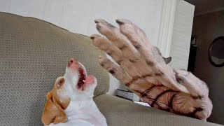 Download Dog vs. Giant Zombie Hand: Cute Dog Maymo Video