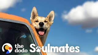 Download People Who Moved Away For Their Pets | The Dodo Soulmates Video
