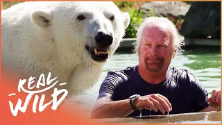 Download Meet The Polar Bear That Purrs For Her Human! | Real Wild Video