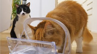 Download We got a microchip cat feeder for only Haku Video