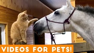 Download Funniest Videos for Pets to Watch Compilation   Funny Pet Videos Video