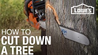 Download How To Cut Down A Tree Video
