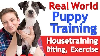 Download Puppy Training 101: This is What a Typical Day Should Look Like Video