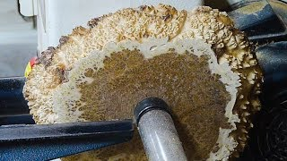 Download Woodturning Imperfection into Beauty Video