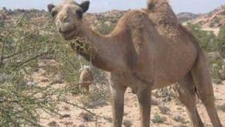 Download Suldaan Timacade (Somalia) Video
