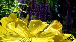 Download Beauty of our Natural World - British Columbia Canada - YouTube Video