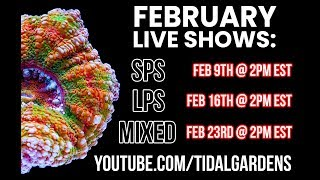 Download Tidal Gardens February 2019 Show #2 (I'm STILL recovering from the flu so bear with me) Video