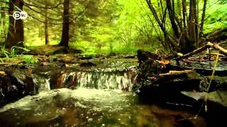Download Green Oasis - The Former Inner German Border | Discover Germany Video