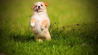 Download Cute Puppies 😂🐶 Funny and Cute Little Dogs (Full) [Funny Pets] Video