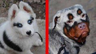 Download 10 Einzigartige Hunde - Mit Unglaublichen Fellmuster! Video