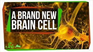 Download A Brand New Type of Brain Cell | SciShow News Video