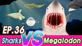 Download [EN] Megalodon is hunting sharks (Zebra, hammerhead, Saw, great white) collecta [cocostoy] Video