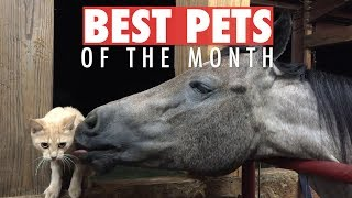 Download Best Pets of the Month Video Compilation | March 2018 Video