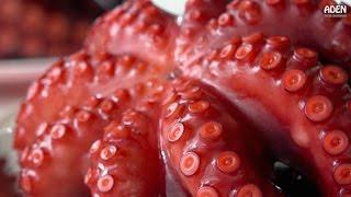 Download Japanese Street Food at Fishing Port: Tempura, Octopus, Grilled Eel Video