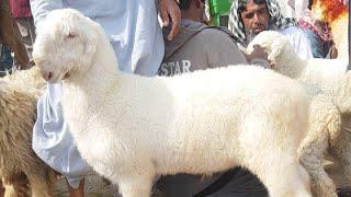 Mundra Chatra Mohammad Sabir God form Dera Ghazi Khan pure