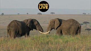 Download safariLIVE - Sunrise Safari - July 15, 2019 Part 1 Video