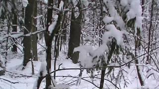 Download Охота на куницу с Лайками. Video