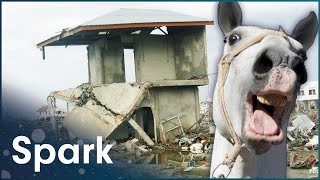 Download Sense Of Danger: How Animals Anticipate Disasters (Nature Documentary) | Spark Video