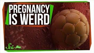 Download How Pregnancy Is Like Growing an Alien Inside You Video