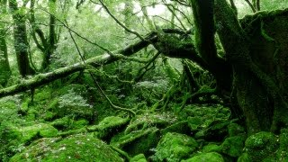 Download [ 4K Ultra HD ] 屋久島 白谷雲水峡 Yakushima-island Shiratani Unsuikyo Video