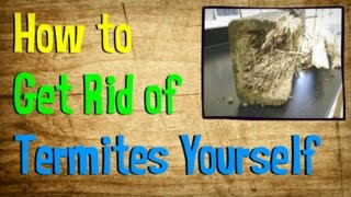 Download How to Get Rid of Termites Yourself   BEST Treatment for Getting Rid of Termites Video