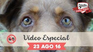 Download Tonella - Video Especial 23-08 Video