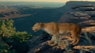 Download BBC: Saber Tooth Cat Prey - Ice Age Death Trap Video