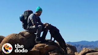 Download Hike With The World's Most Resilient Pittie | The Dodo Airbnb Experiences Video