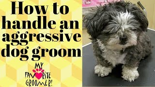 Download How to groom a mean Shih Tzu Video