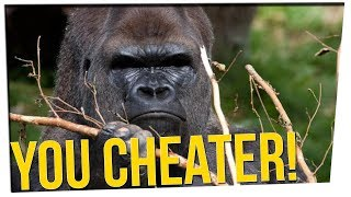 Download This Gorilla Knows How to CHEAT in Puzzle Games ft. All Male Cast Video
