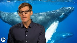 Download Amazing Facts About Whales! Video
