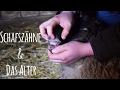 Download Schafszähne und das Alter Video