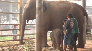 Download Big surprise at Elephant Nature Park! Video