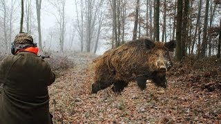 Download Hunting for wild boar. great moments. selection videos of real hunt Video