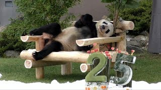 Download 【おめでとう!】永明パパ🐼25歳のバースデーパーティ🎊【またまた世界記録更新❤】Father Panda -Eimei-☆Happy 25th Birthday party♪ Video