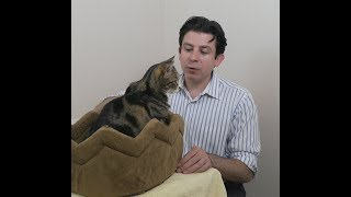 Download How to care for an older cat Part 3 of 3 Video