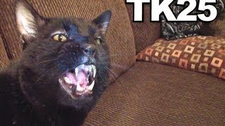 Download Talking Kitty Cat 25 - A Very Angry Kitty Cat Video