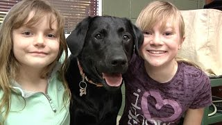 Download Meet Lucie - Therapy Dog Video