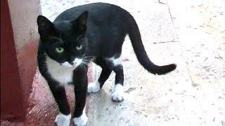 Download 散歩の途中で消えた猫は?あっ!猫が倒れてる!焦るの巻き ♯3 Video