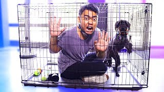 Download Escape The Dog Cage Challenge! Video