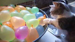 Download Cats VS Balloons 😂🎈 Funny Cats Playing With Balloons [Funny Pets] Video