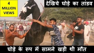 Download पुष्कर मेले में घोड़ा हुआ बेकाबू : कैसे किया काबू में ? Controlling Indian Horses In Pushkar Fair Video