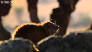Download Hyrax sunshield - 24 Hours on Earth: Preview - BBC One Video