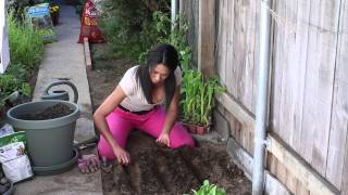Download How to Sow Mustard Seeds : The Chef's Garden Video